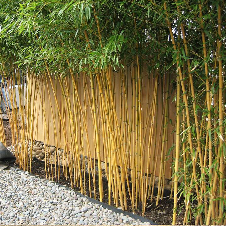 Bamboo Oasis | The Bamboo Experts